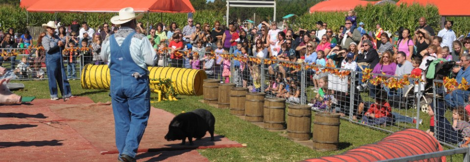 Fall Farm Festival